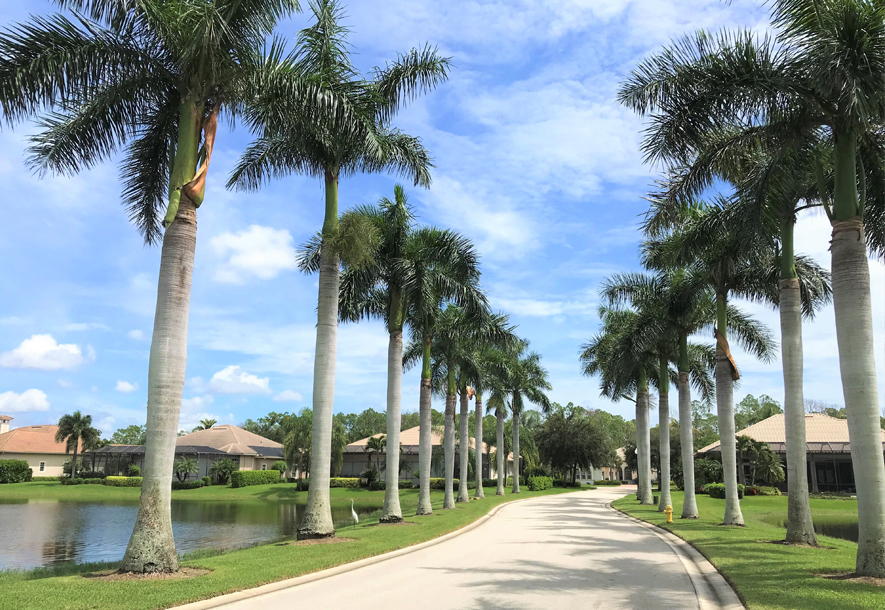 Trees Lining Road at Banyan Bay | Hammock Isles at The Vineyards HOA